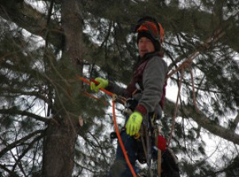 Traverse City Tree Service, Lake Leelanau, MI - Carlson Tree Service